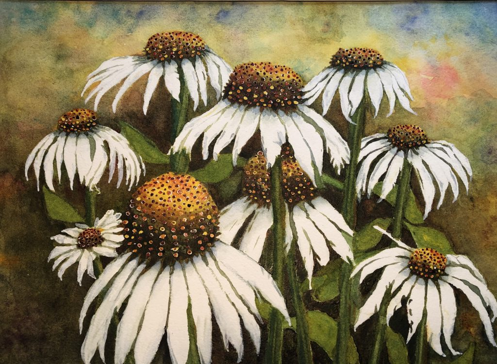 Kerry Vavra White Coneflower Watercolor