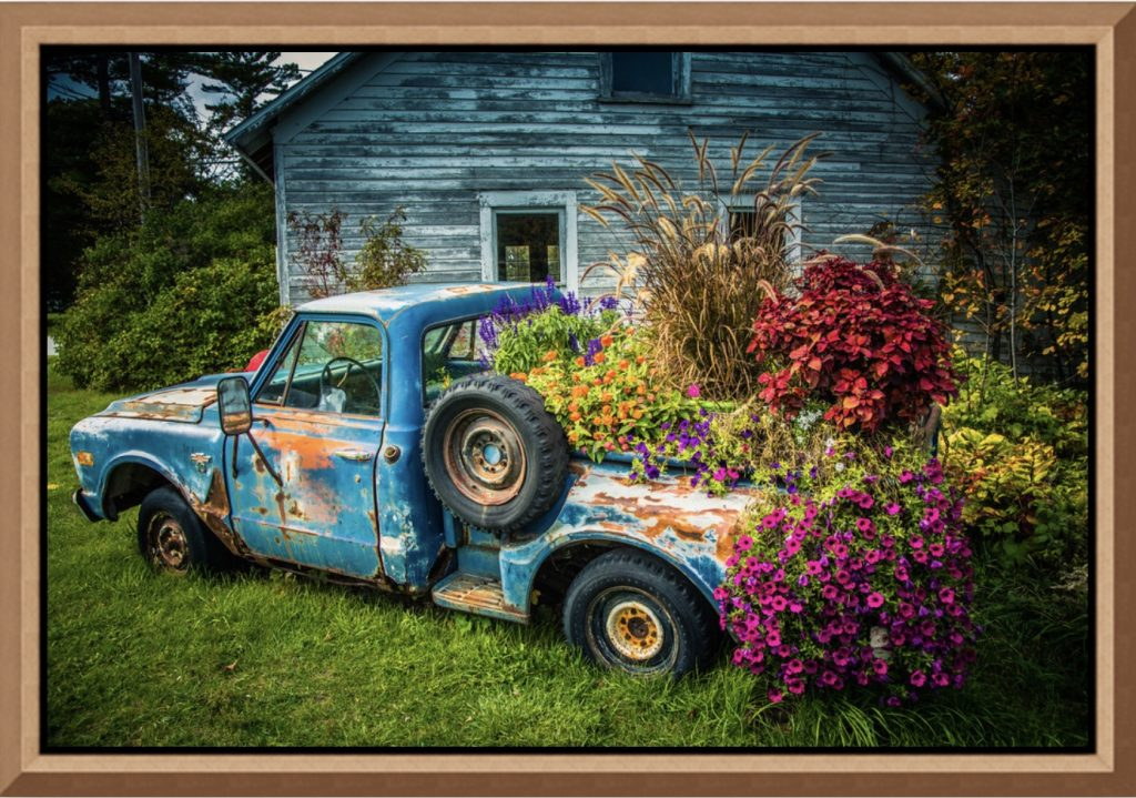 "Mike Caplan ""Flower Bed"" Photography"