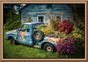 """Mike Caplan """"Flower Bed"""" Photography"""