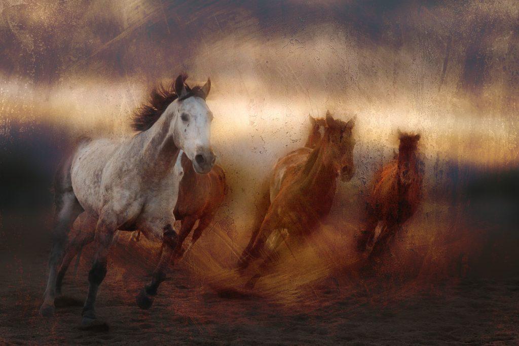 "Mike Caplan ""The Far Turn"" Photography 40x60"