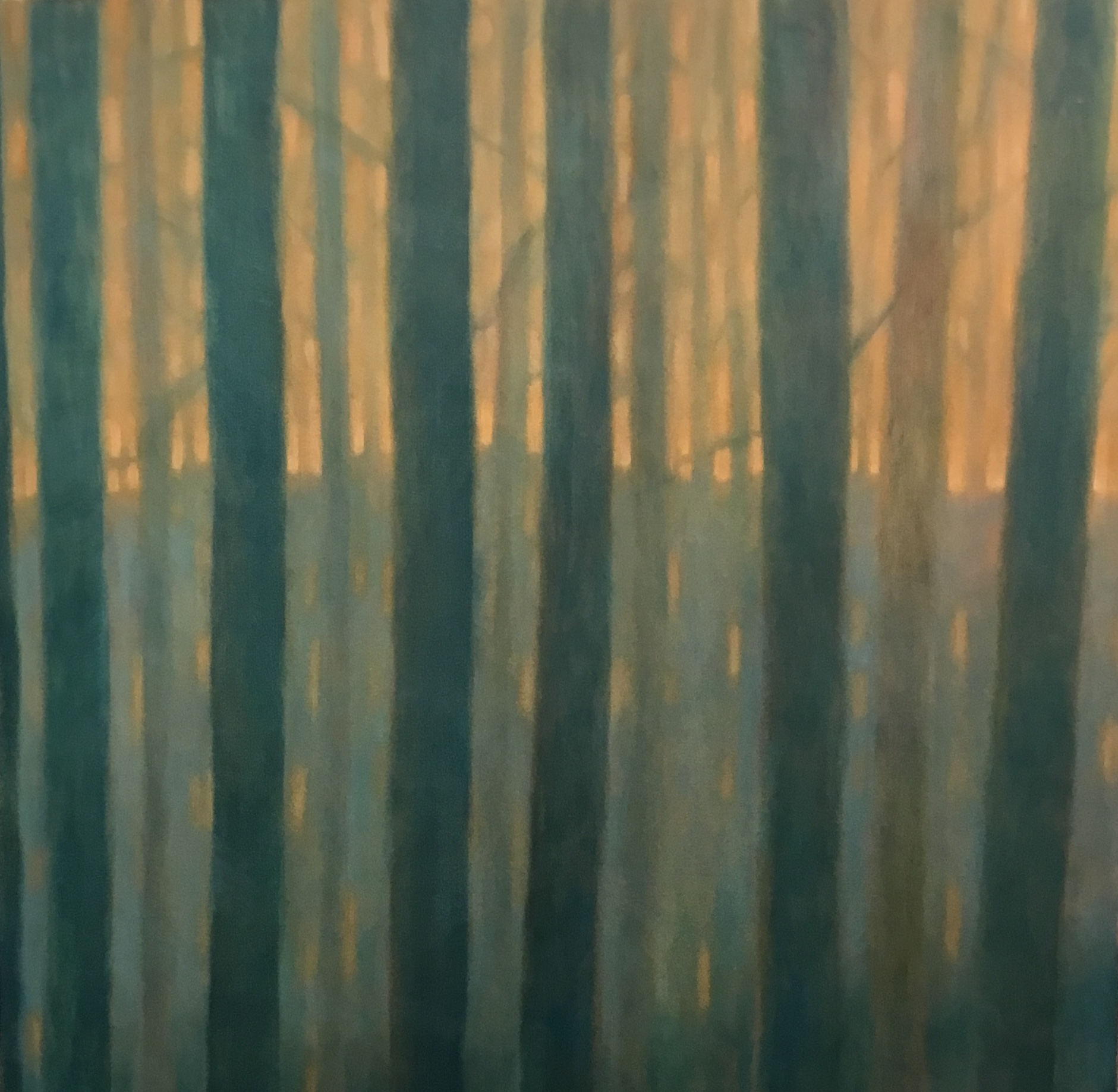 """Evening Woods""<br>  Oil On Canvas<br>  42""x44"""